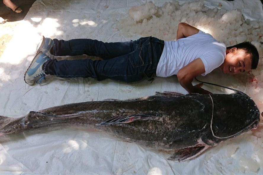 Câu được cá lăng đuôi đỏ nặng 1 tạ khoảng hơn 50 tuổi trên sông Serepok