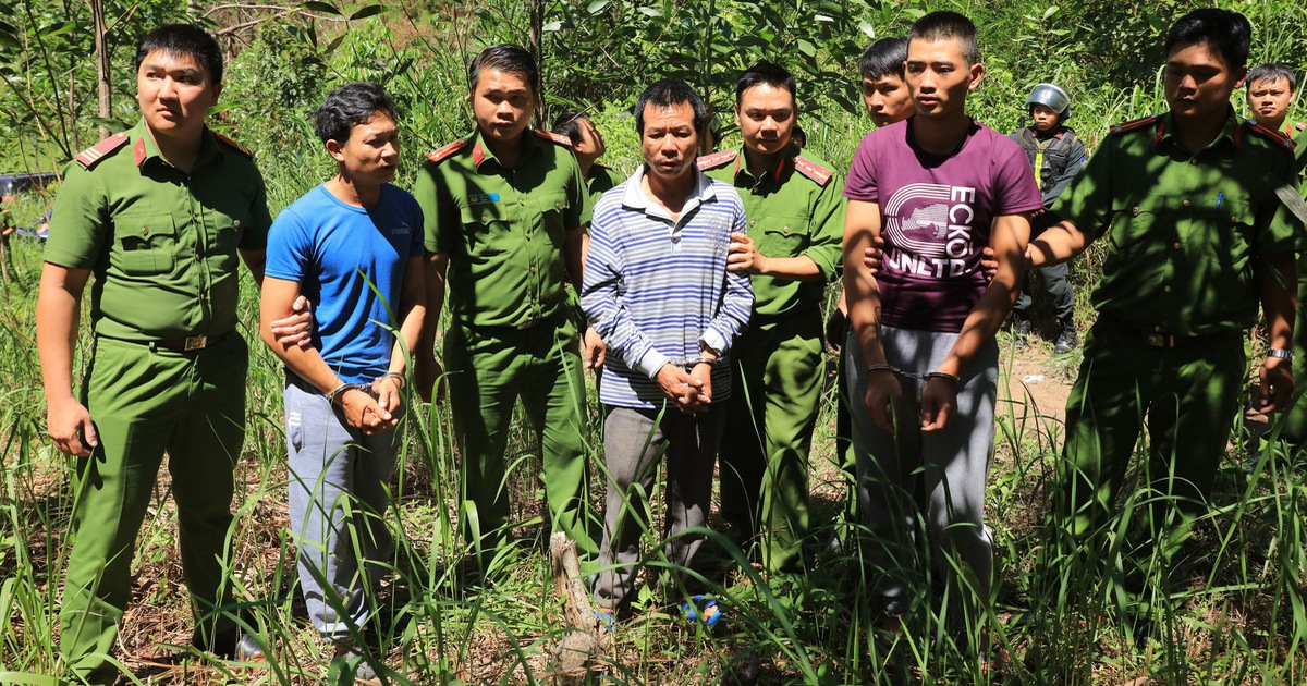 Bắt kẻ cầm đầu vụ hạ độc rừng thông 3.500 cây ở Lâm Đồng