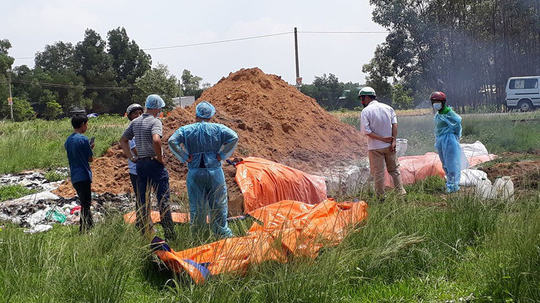 Khởi tố một vụ giết mổ, tàng trữ lợn nhiễm dịch tả heo châu Phi